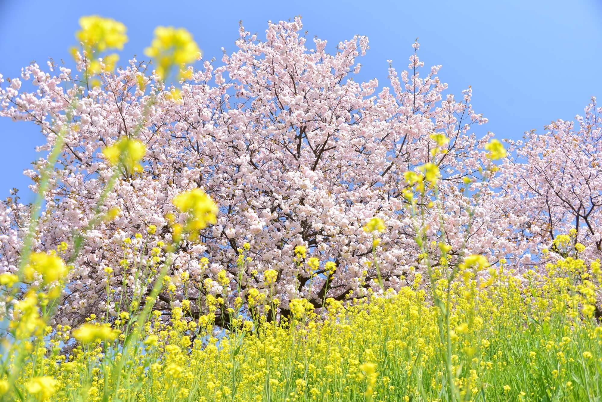 花粉症の時期は肌トラブルにも要注意!? 白色ワセリンで乾燥肌対策