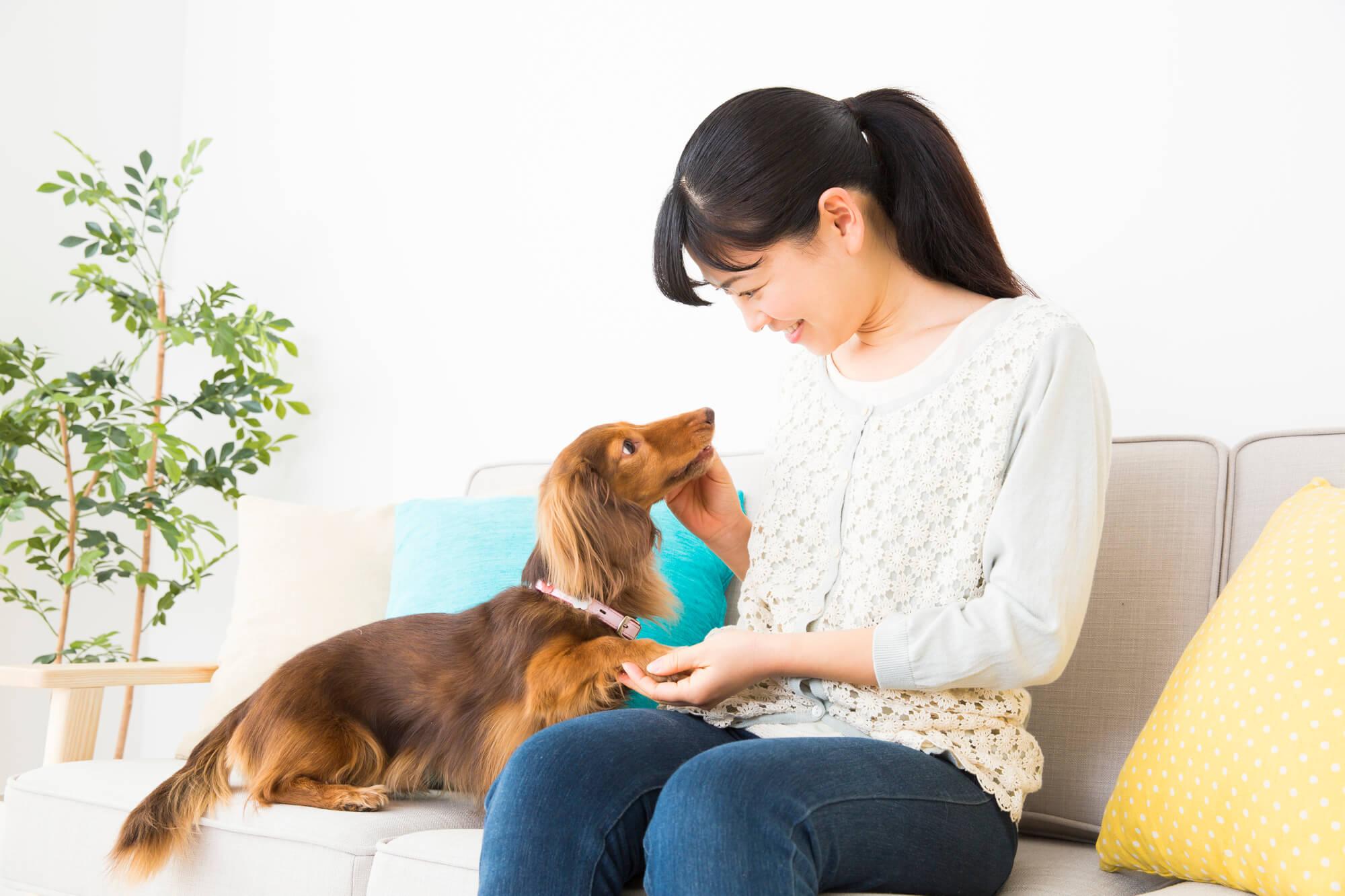 犬や猫にも感染する?ノロウイルスからペットを守る方法
