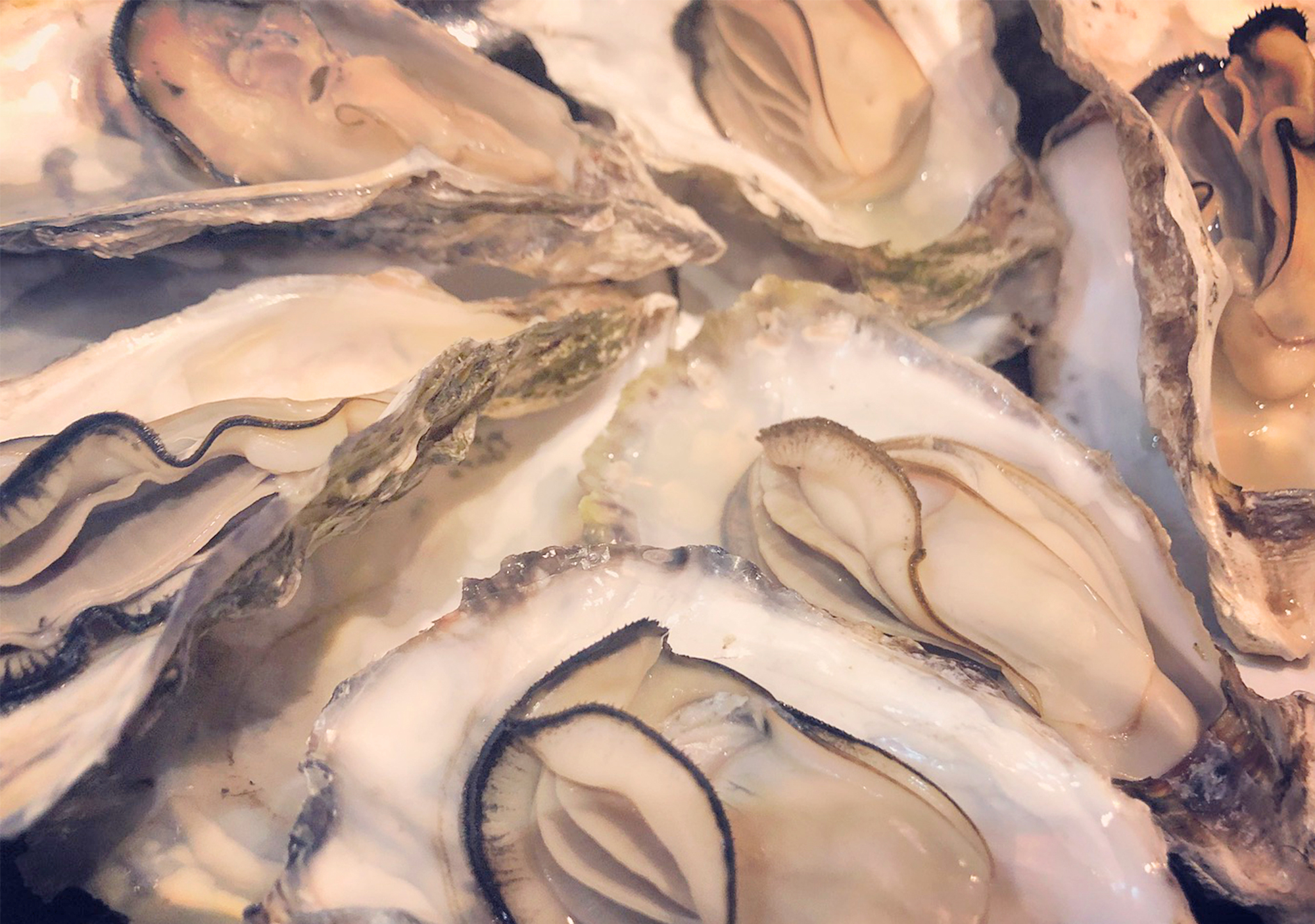症状 牡蠣 食中毒